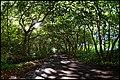 Waianapanapa State Park, Maui (6127784519).jpg