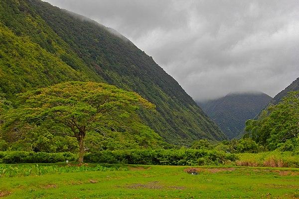 Hawaii Big Island Tours