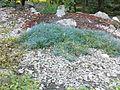 Warszawski Ogród Botaniczny – 33.jpg