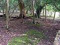 Wasted medieval earthwork, Ridley Wood, New Forest - geograph.org.uk - 433117.jpg