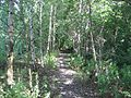 Waverley Line, Sheriffhall. - geograph.org.uk - 28775.jpg
