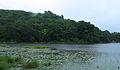 Wayanad Pookkode Lake2.jpg