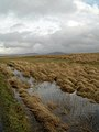 Wet Walking Conditions - geograph.org.uk - 351848.jpg