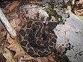 Wild Oak Trail snake.jpg