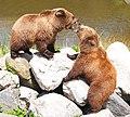 Wildpark Poing - fighting bears.jpg
