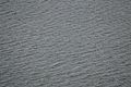 Wind-generated Water Waves - Nalban - Kolkata 2013-09-20 0221.JPG