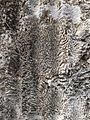 Windley Key fossil 2.JPG