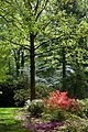 Wister Rhododendron Collection - DSC01789.JPG