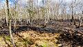 Wittmoor Feuer 2015-04 3.jpg