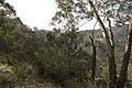 Wombean Caves Road - panoramio - Maksym Kozlenko.jpg