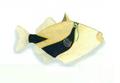 XRF-Rhinecanthus rectangulus.png