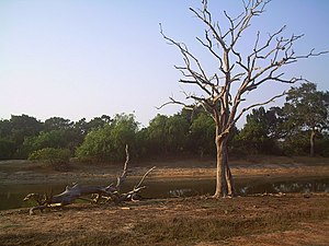 Yala National Park - Surface water becomes critical in the dry season