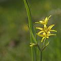 Yellow (4571950833).jpg