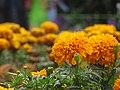 Yellow flowers in Botanical Garden in Ooty.jpj.jpg