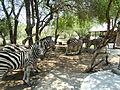 Zebras Call of Africa.JPG