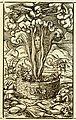 Zwinglibibel (1531) Apocalypse 07 Fünfte Posaune.jpg