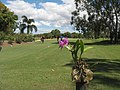 """Rock Orchid"" No 10 Tee April 2009 - panoramio.jpg"