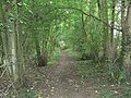 'Towpath' of Husbands Bosworth Tunnel - geograph.org.uk - 546438.jpg