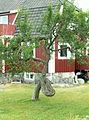 Äppleträd i trädgård (Donsö) PICT1289.jpg