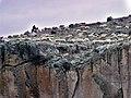 Çoban ve Koyunlar - Shepherd and Sheep - panoramio.jpg