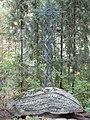 Čiurlionytė-Zubovienė, kapas.JPG