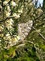 Бабочка из Сочи передает привет.jpg