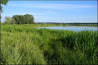 Kostromskoy District District in Kostroma Oblast, Russia