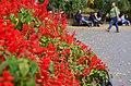Городской сад по Дерибасовской. Фото 10.jpg