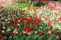 Елагин парк, фестиваль тюльпанов875.jpg