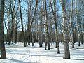 Зимний денёк. - panoramio.jpg