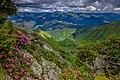 Квіт рододендрону на Мармаросах.jpg