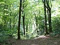 Лес на берегу реки Сочи.JPG