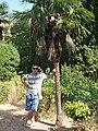 Нікітський ботанічний сад....м. Ялта, сел. Нікіта.jpg