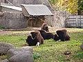 Овцебыки - panoramio.jpg