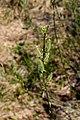 Озерне Верба DSC 0453.jpg