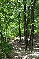 Парк Берёзовая роща в Киеве. Фото 39.jpg