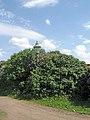 Петропавловская крепость, сквер с северной стороны02.jpg