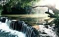 Пойменное болото на реке Корюшке.jpg