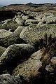 Природен парк Витоша – PP01 – Платото - No5.jpg