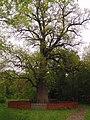 Самый древний дуб в Святогорском парке.jpg