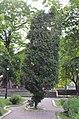 Территория городского сада в Киеве. Весна 2019. Фото 9.jpg