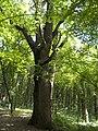 Украина, Киев - Голосеевский лес 128.jpg
