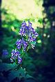 Цветок ботанического сада 05.jpg