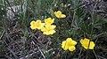 Մայիսյան ծաղիկներ 1.jpg