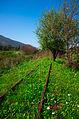 רכבת העמק סמוך לצומת העמקים 1.jpg