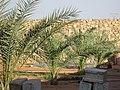 بستان متليلي الجديدة - panoramio.jpg