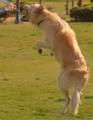 كلب في مصر 12.PNG