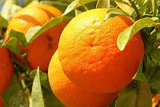 """Orange Frucht fruit Cyprus PICT8063"
