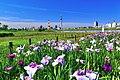 堀切水辺公園 - panoramio (1).jpg