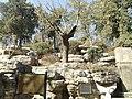 崇祯皇帝自缢处 - Chongzhen Emperor Hanged Himself on This Tree - 2011.03 - panoramio.jpg